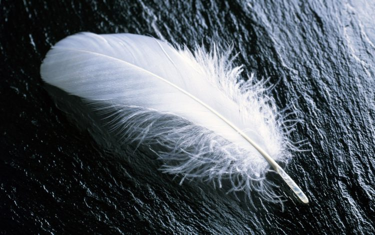 to show the white feather