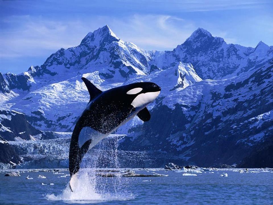 Строение кита