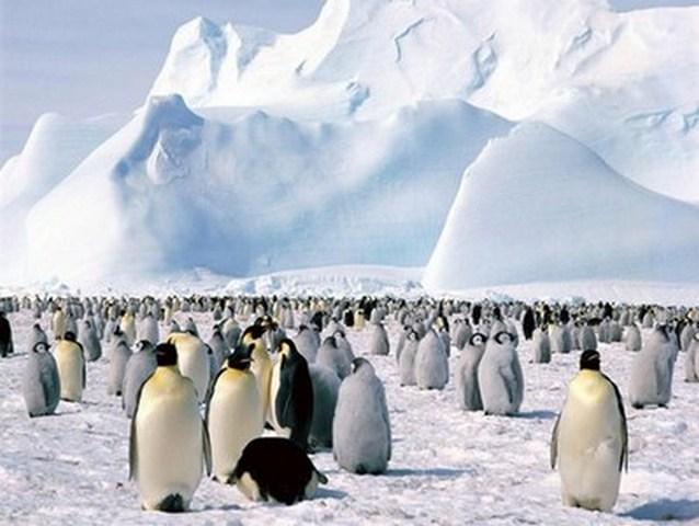 Антарктид