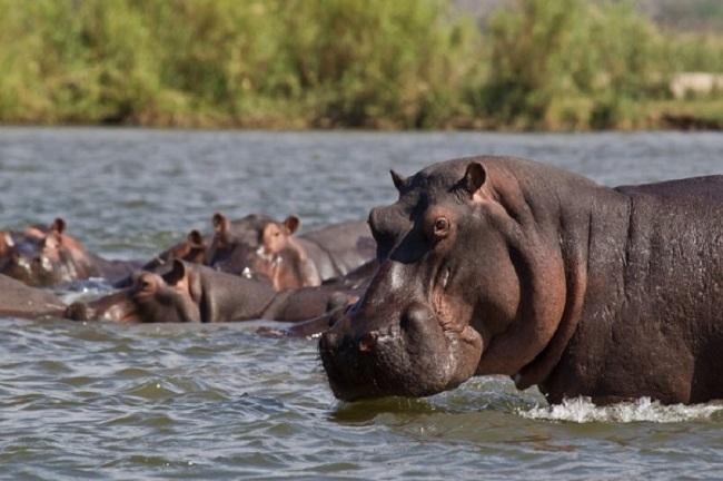 Национальный парк Замбия