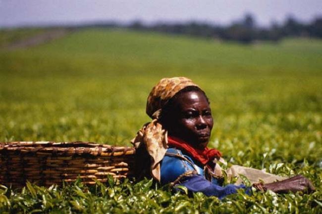 Сельское хозяйство Зимбабве