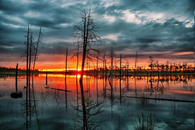 Уникальная фауна и флора Васюганского болота
