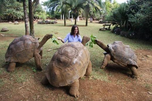 Slonovaja-cherepaha