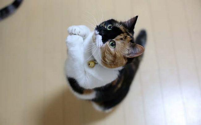 Кот просит корм