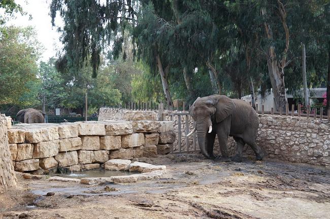 слон Йоси