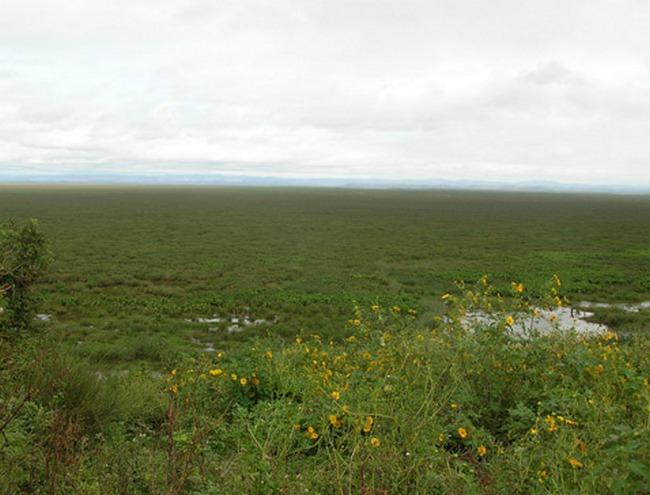 Болотистая местность вокруг озера Алаотра