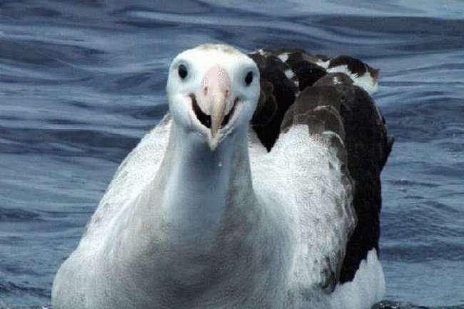 Альбатросы сопровождают мореплавателей