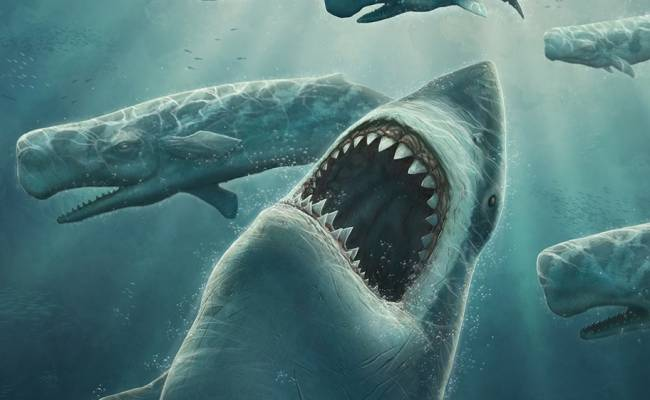 Акула мегалодон таранила свою жертву перед тем, как съесть ее