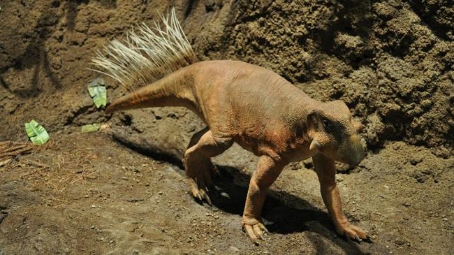 Кемеровский Пситтакозавр