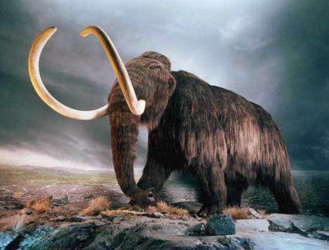 Мамонт из Сибири