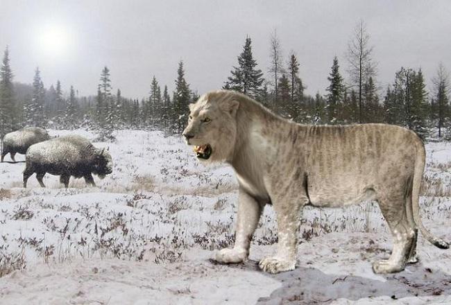 Якутский пещерный лев