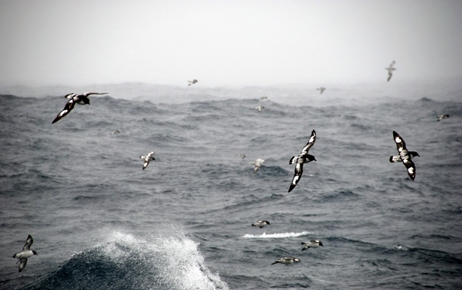 Над проливом летает множество птиц