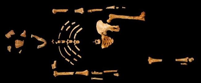 Эволюционисты доказывают теорию разовыми находками