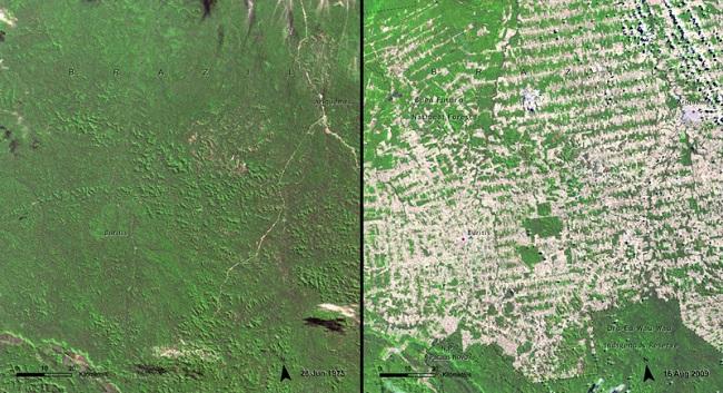 Обезлесение в Бразилии