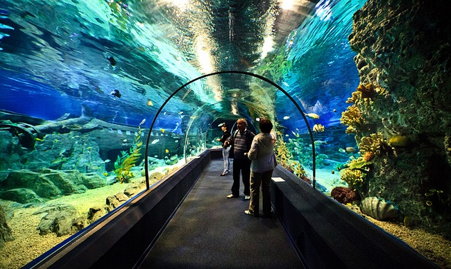 Океанариум Sochi Dicovery World Aquarium