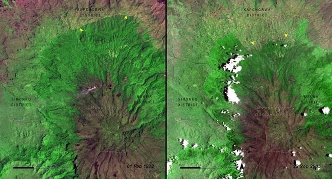 Вырубка деревьев в национальном парке Маунт-Элгон