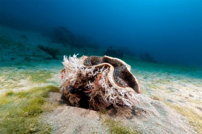 В Марианской впадине обнаружены моллюски