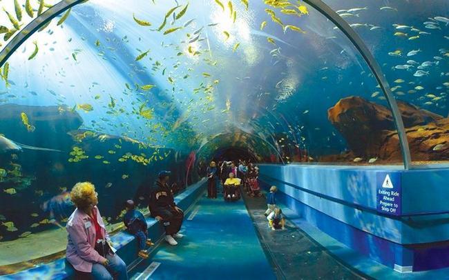 Сиднейский океанариум