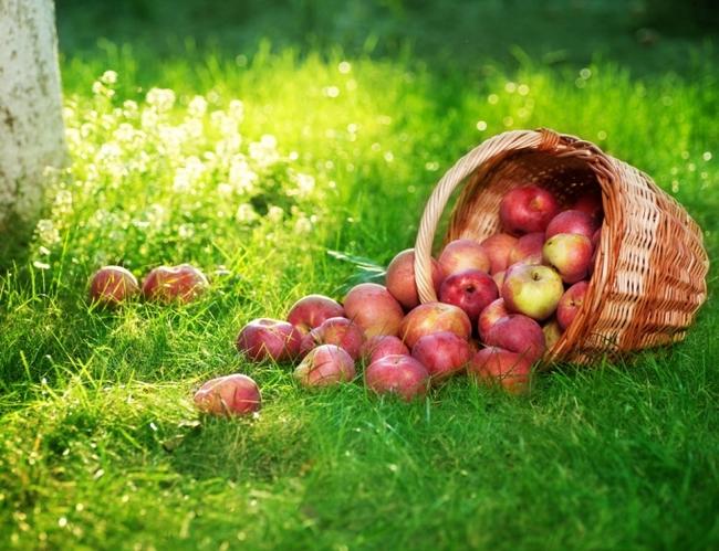 Яблоки полезны при анемии