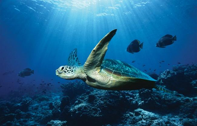 Животный и растительный мир в Тихом океане довольно разнообразен