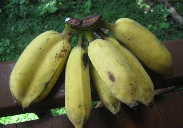 Тайские волосатые бананы