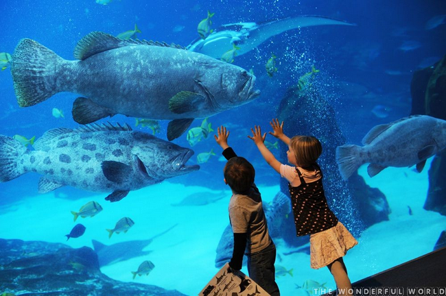 аквариум Джорджии