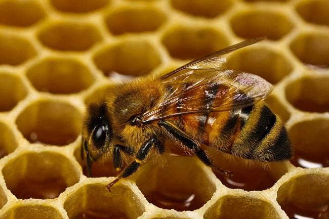 Добыча меда, работа не из простых