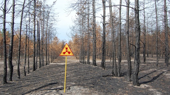 Мертвый лес Чернобыля