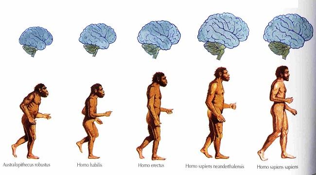 Мясо – двигатель эволюции