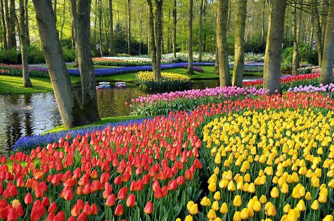 Кекенхоф – парк цветов в Голландии