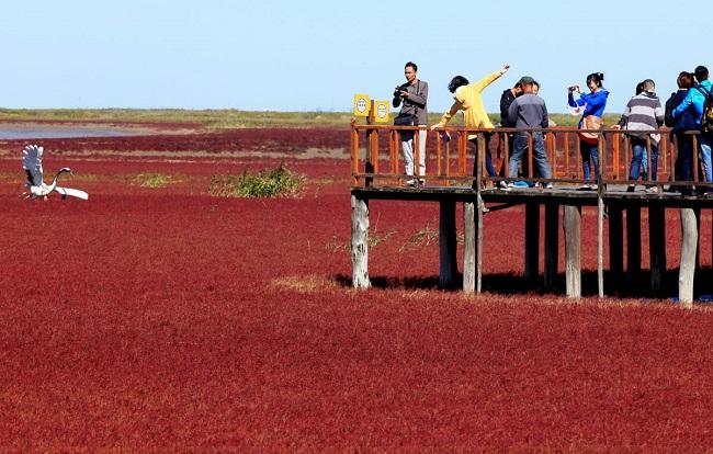 Красный пляж Паньцзинь (Китай)