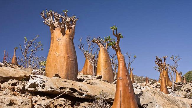 Острова Сокотра, Йеменская Республика
