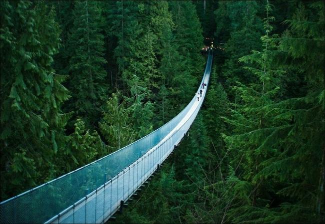 Самые большие деревья без документов