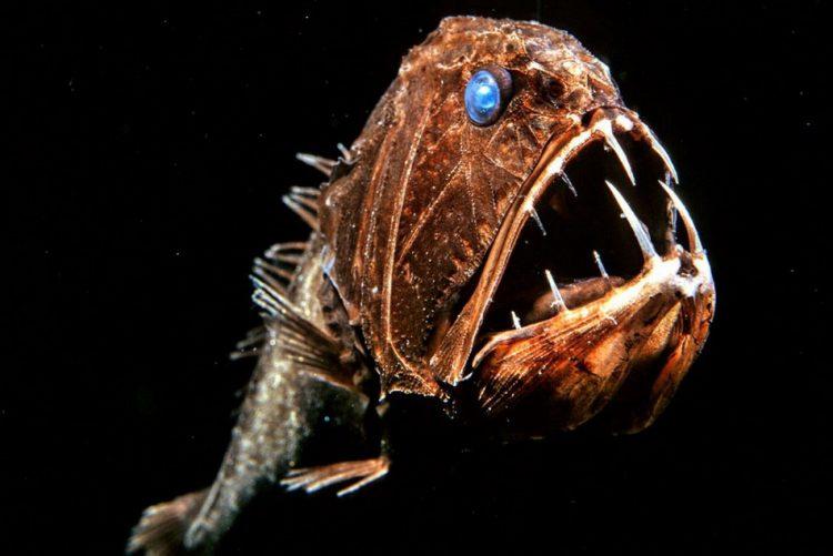 Рыба-саблезуб
