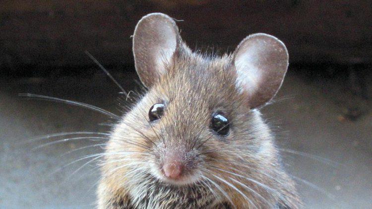 Мышь поменяла планы авиакомпании