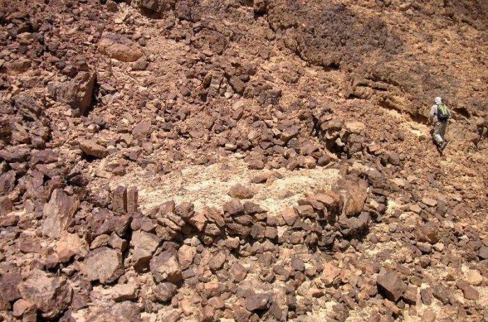 Пустынные змеи