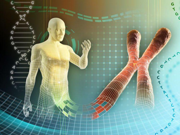 Сколько хромосом у человека?