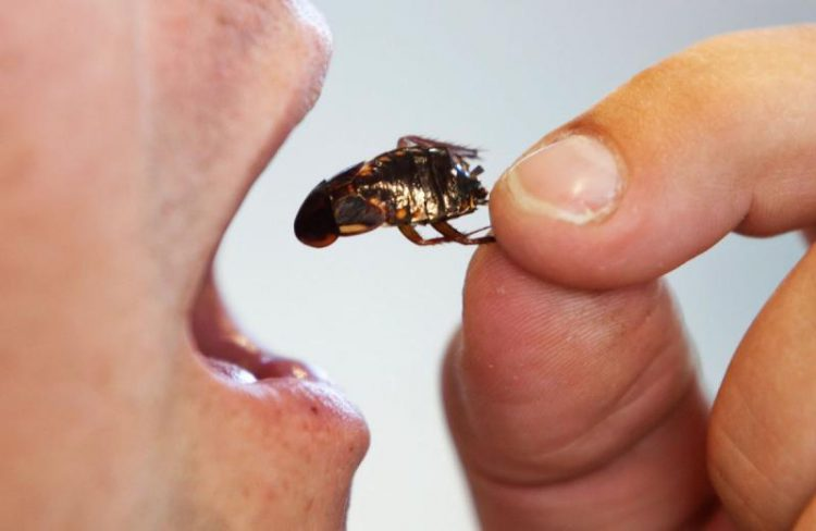 Съесть таракана