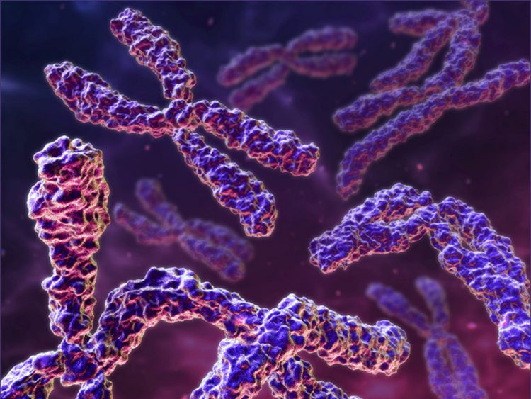 Размножения и деления хромосом
