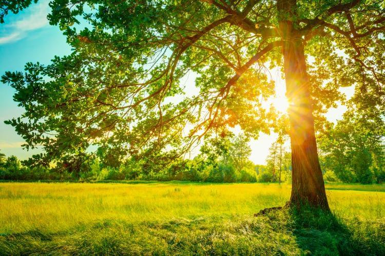 Июньское солнцестояние