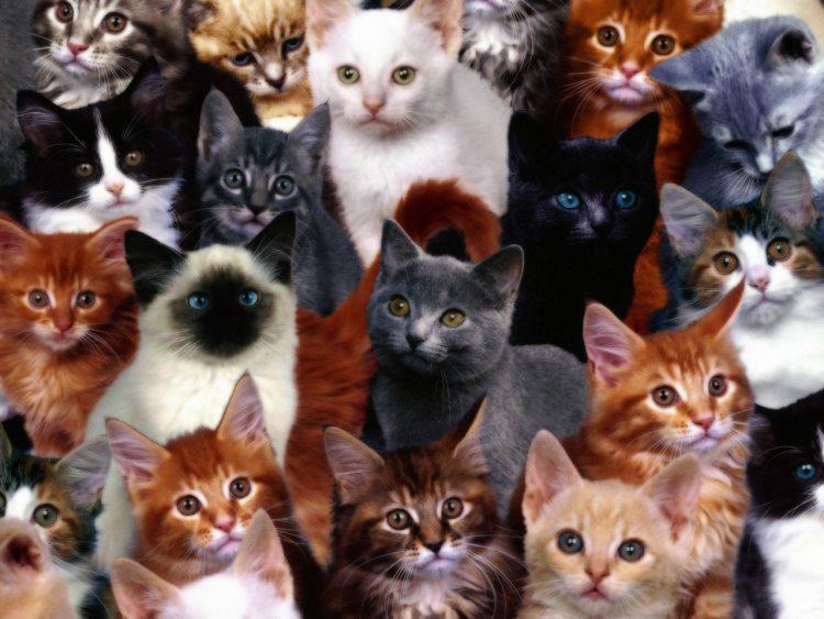 разноцветные котята