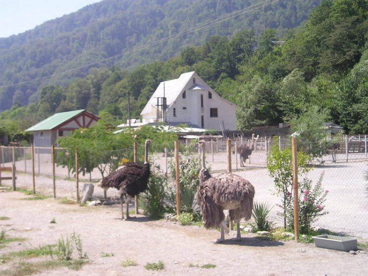 страусиная ферма