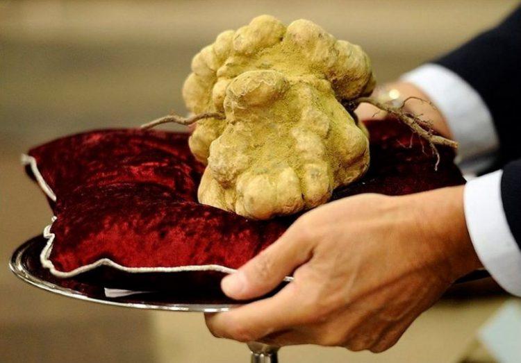 Самые дорогие грибы в мире