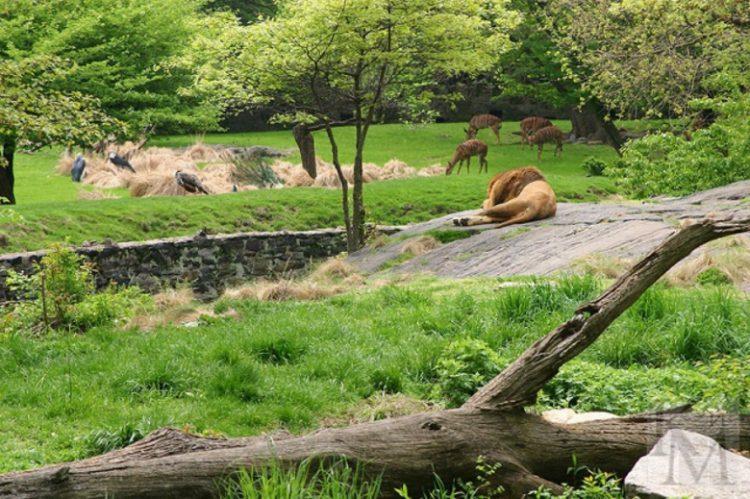Самый большой зоопарк в России