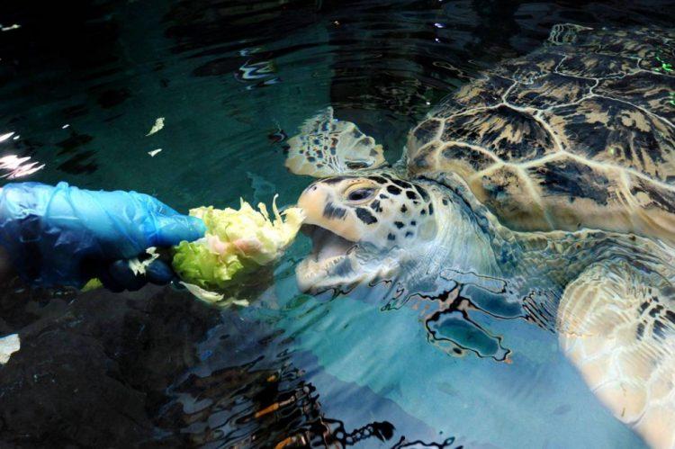 питание водных черепах