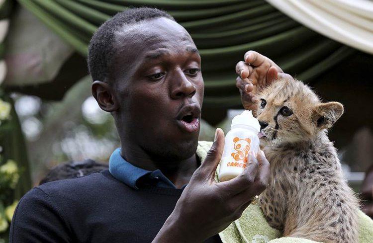 Болт содержит на попечительстве кенийского гепарда