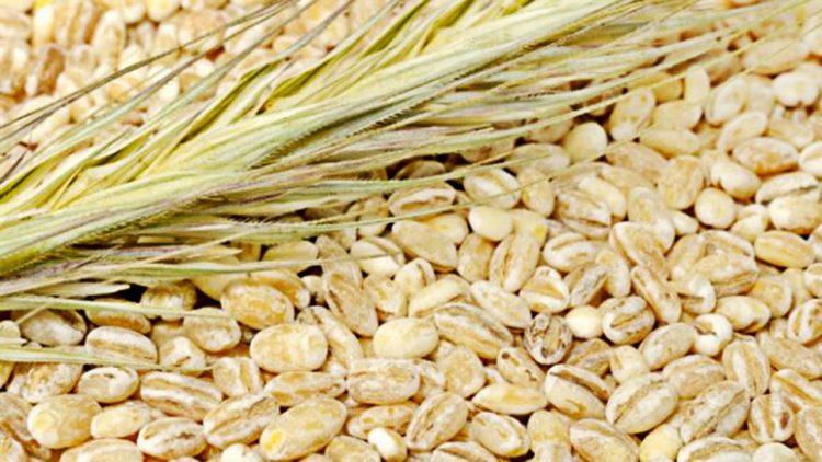 зерна перловки