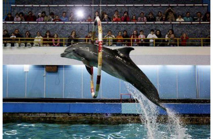 дельфинарий в москве