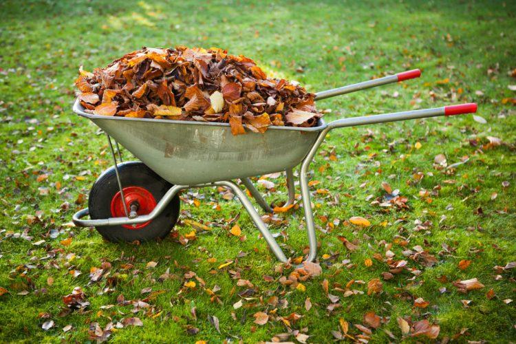 Как ухаживать за садом в ноябре