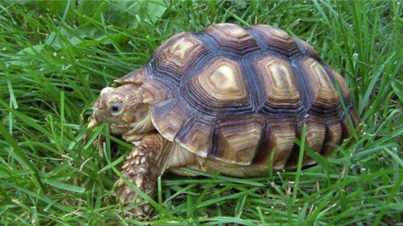 питание черепахи